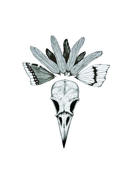 peacocka4webb