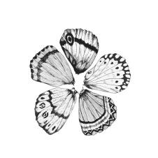 Wingflower