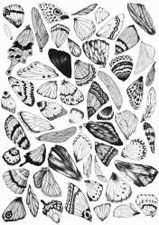 artprint flee fly flown