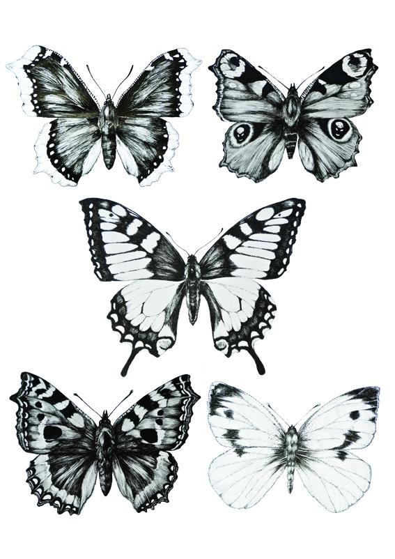 butterflymap2
