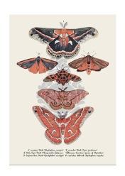 Artprint moths-blyerts ,digital färgläggning