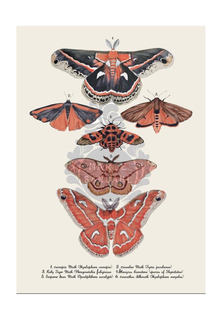 mothmapweb